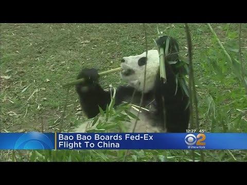 Bao Bao Bound For China
