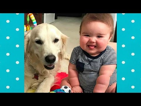 Golden retriever loves to Play with Baby and Children | Dog and Baby Compilation