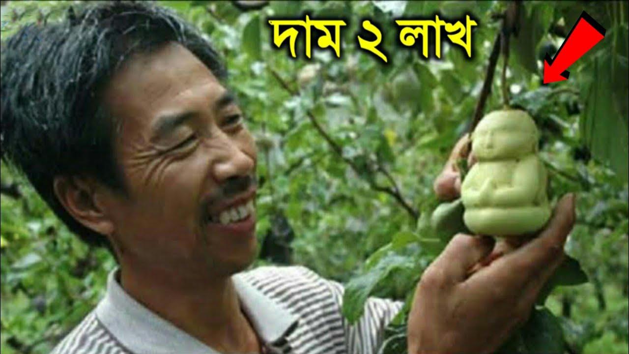 পৃথিবীর সবথেকে দামি ফল - যার দাম শুনলে আপনার মাথা ঘুরে যাবে। Top 10 Most Expensive Fruits in Bangla