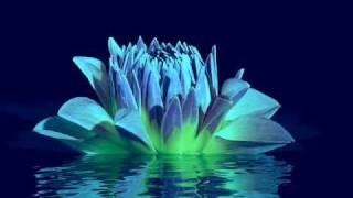 Erik Berglund - Blue Lotus (Harpa Para Bebês)