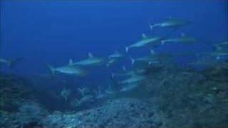 SHARKS 3D - IMAX -