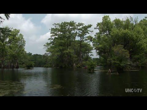 Merchants Millpond State Park   NC Weekend   UNC-TV