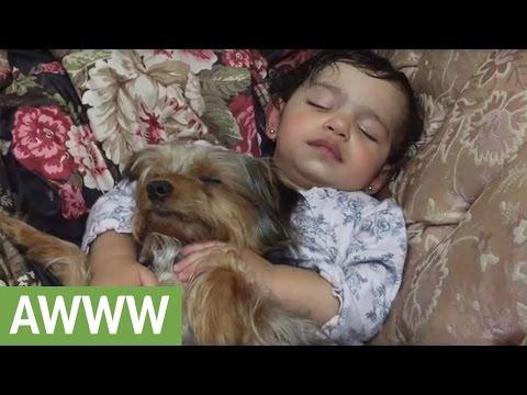Dog preciously falls asleep with sleeping baby