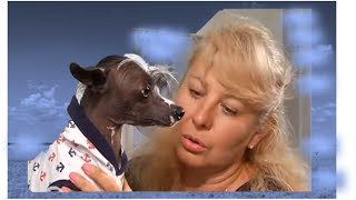 Травмы  на   лапах   собаки .   Советы  хозяевам  собак .