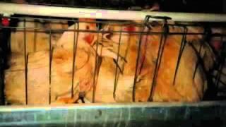 Le droit animal (FR)