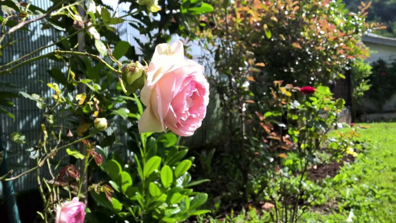 film fleurs - youtube