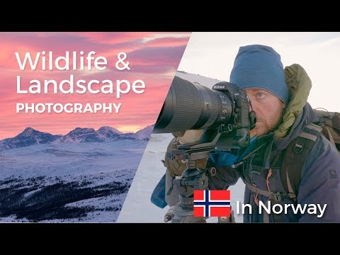 WILDLIFE and LANDSCAPE PHOTOGRAPHY in NORWAY | VLOG from my trip to the awesome nature of Norway