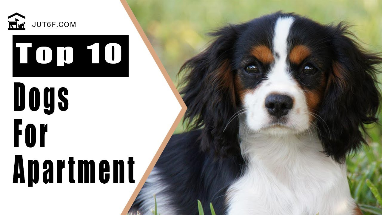 Best Apartment Dogs - Top 10 Best Dog Breeds For Apartment ...
