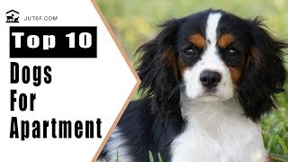 Best Apartment Dogs - Top 10 Best Dog Breeds For Apartment Living