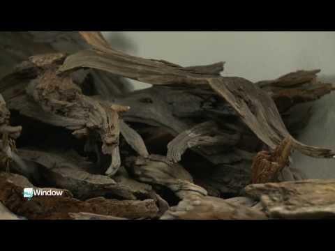 He transforms fallen branches into beautiful sculptures by John Hammarley
