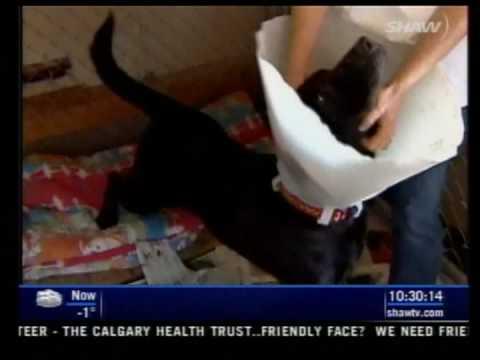 AARCS On The News Alberta Animal Rescue Crew