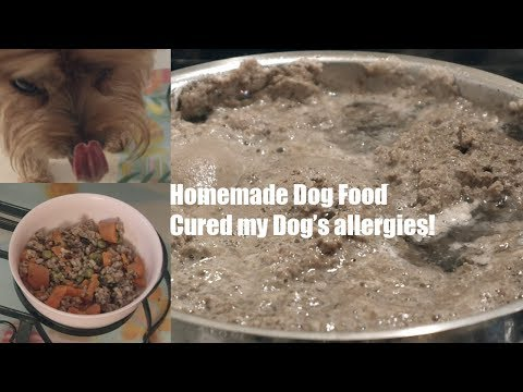 homemade-dog-food-recipe!-[cured-my-dog's-allergies]