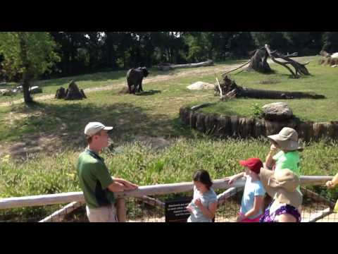 African Elephant Interpretive Chat at Omaha's Henry Doorly Zoo & Aquarium 2