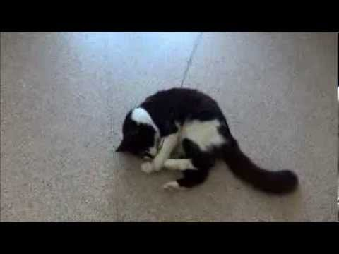 RSPCA Rehoming Cadi the cat