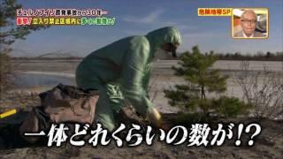 チェルノブイリ立入禁止地域にカメラ潜入 野生動物天国 thumbnail