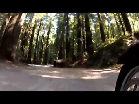 Avenue of the Giants 2013
