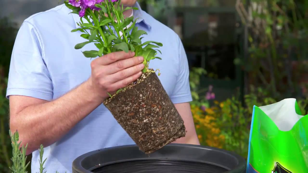 How to Pot a Plant with Use Potting Mix & How to Pot a Plant with Use Potting Mix - YouTube