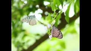 素晴らしき日々へ ~あぐり組曲より~(作曲:岩代太郎) Cimbalom by H...