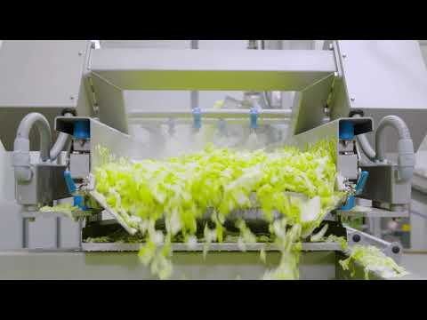 Processing Line For Salad And Vegetable: For Up To 1000 Kg Per Hour