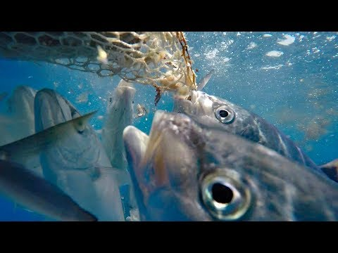Too Much Bait To Fish - Reef Fishing With Fred & Jay