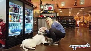 American Bulldog Training I Best Arizona Dog Trainers I Phoenix Dog Training I AllAmerican K9
