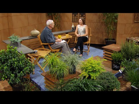 Evergreen Ideas for Sun & Shade   Jessica Robertson   Central Texas Gardener Mp3
