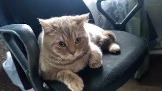 Кот говорит открой видео