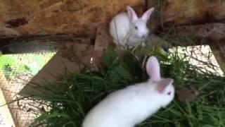 Natural rabbit feeding