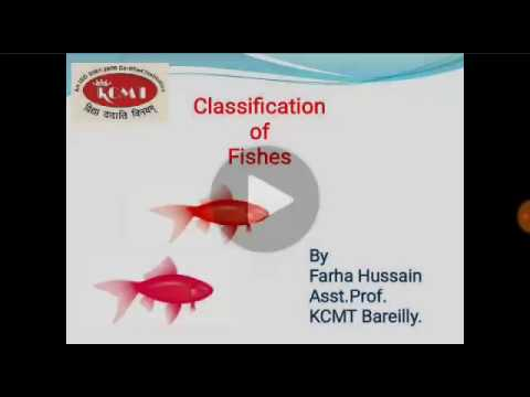 Classification Of Fishes Tutorial In Hindi For Science Students Of AKTU And Mjpru