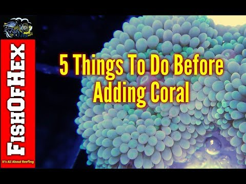 5 Things Everyone Should Do Before Adding Coral To A Saltwater Aquarium