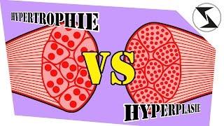 Hypertrophie vs. Hyperplasie - Aufklärung im Muskelaufbau