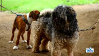 How to Stop Coprophagia (Feces Eating) in Dogs - PetSmart