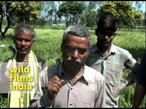 Indian farmers speak about damaged crops due to unseasonal rain and hailstorm