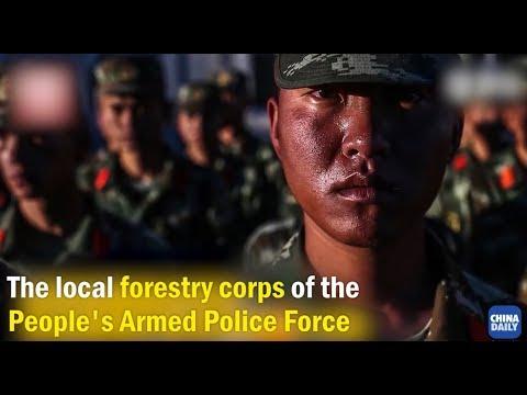 """Guardians for Tibetan Antelopes: Heros in """"Forbidden Zone"""""""