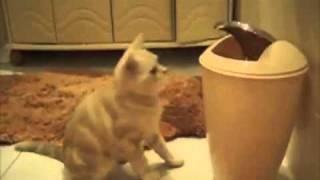 Смешной кот Ларион против мусорного ведра