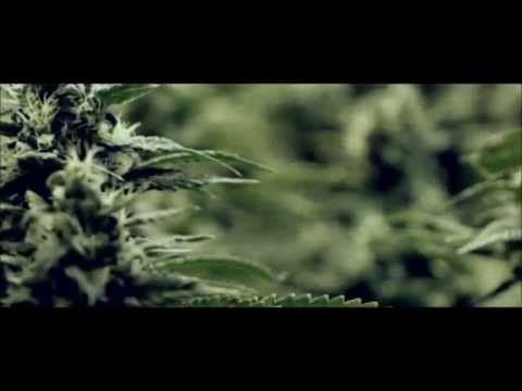 Snoop Lion Smoke the Weed Mp3 - Marijuana Fundraiser Campaign
