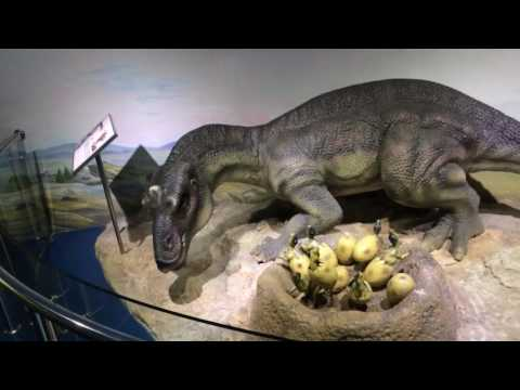 Beijing Museum of Natural History - Beijing - China (2 last)