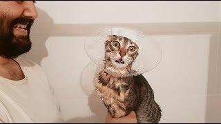 Kedilerimiz PİRELENDİ YIKIYORUZ  -  Gümüş AĞLIYOR