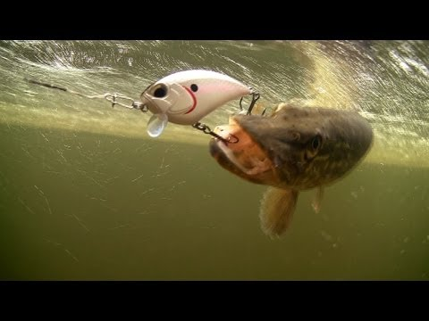 Thumbnail: Spring pike fishing. DUO lures for bass muskie perch. Рыбалка щука на воблер.