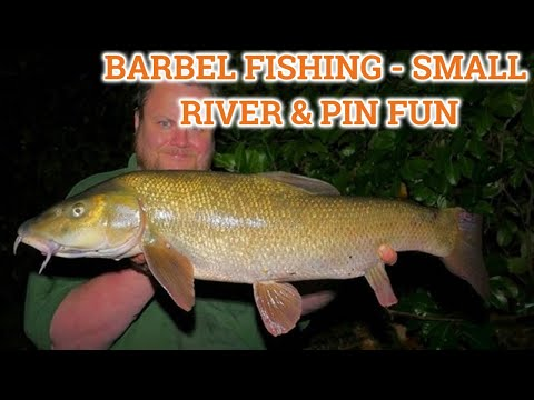 Barbel Fishing On A Small River (Video 168)