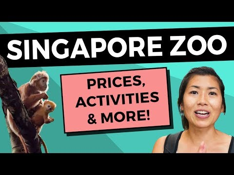 singapore-zoo:-the-best-in-the-world-(2019-travel-guide)