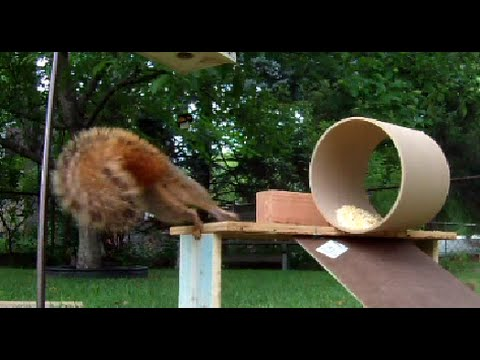 Fun with Squirrels - will it roll?