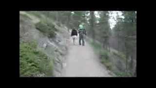 Hiking Tunnel Mountain Banff, Alberta