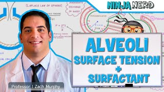 Respiratory   Surface Tension & Surfactant in Alveoli