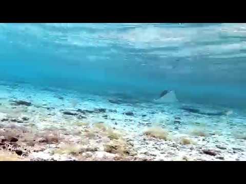 SJCAM SJ7 Star (GOPRO KILLER) Underwater Footage