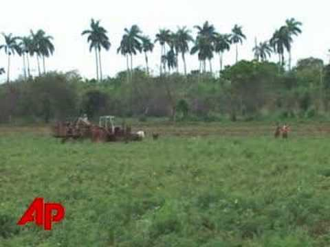 Cuba Hopes Small Farms Will Ease Food Woes