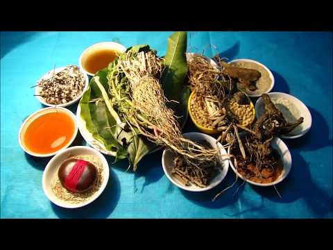Tribal Herbal Medicines for Cancer Prevention and Cure by Pankaj Oudhia-1138