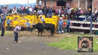 LOS TOROS DERRIBADORES DE JUAN ROSAS, EN QUINCEO MICH.