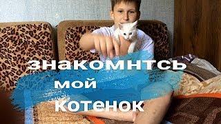 Мой Ангорский котик/Новый питомец-Беляш/Немного о породе