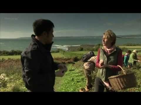 Fat Hen on BBC Countryfile